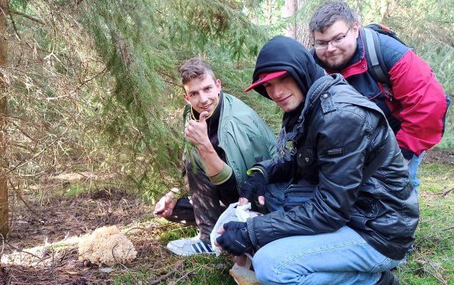 Pilze-Sammeln in Polen