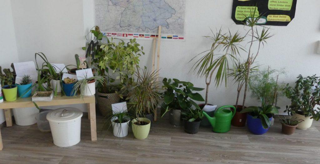 Umgetopfte und beschilderte Pflanzen