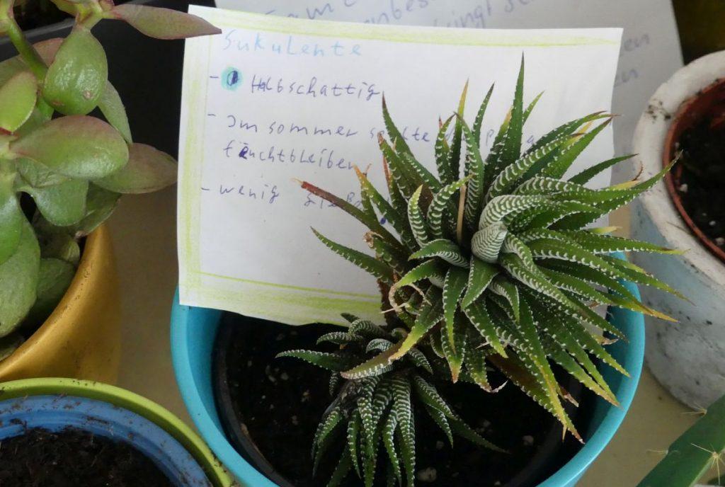 Beschilderte Pflanze