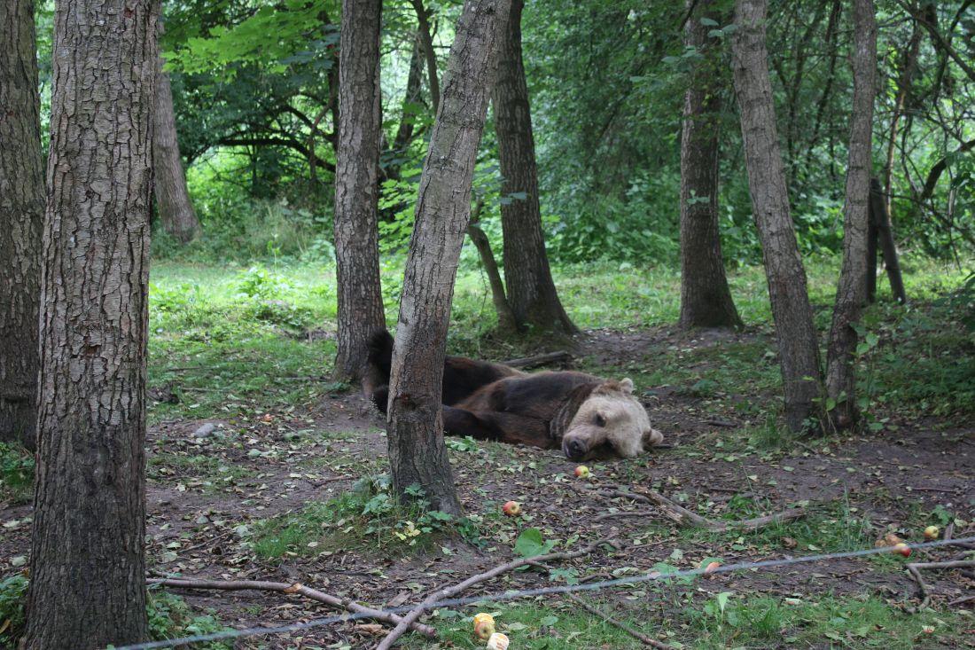 Bildungsfahrt 2020 Bären-Wald