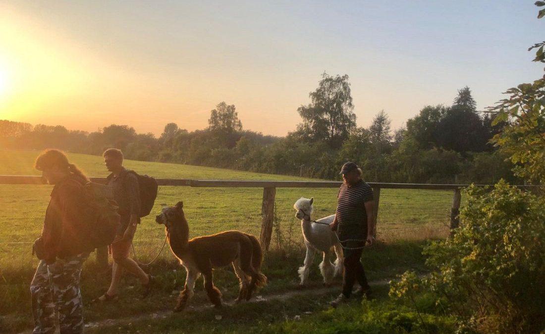 ein Spaziergang mit Alpakas