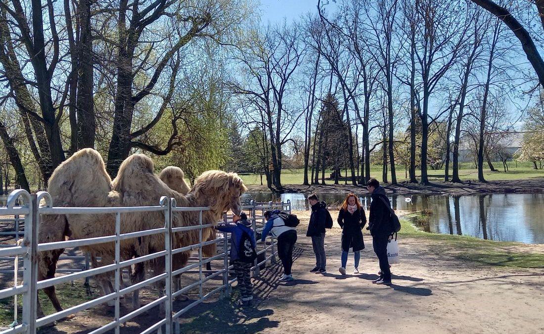 Circus William - Besuch und Fütterung der Tiere